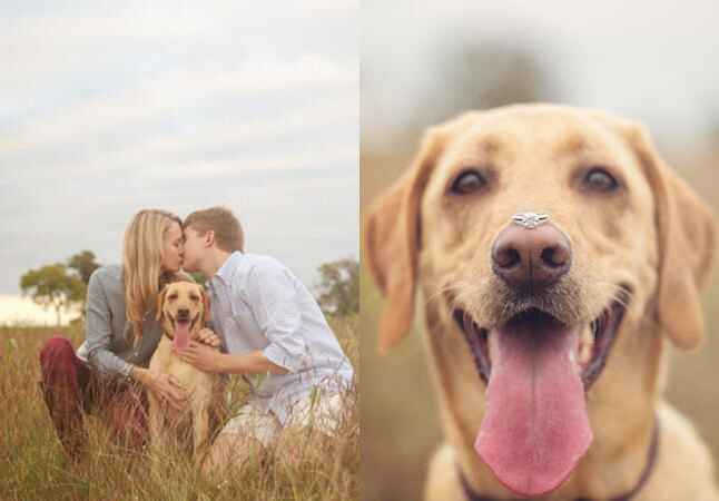 Engaged couple with labrador