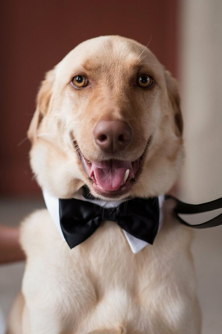 """Our yellow lab, Beaureagrd, was the ring bearer,"" Kathleen says. ""Alan built a special box for him to sit on during the reception, and we trained for months to make sure he knew his wedding pose command. It was also his third birthday, so it was extra-special for us to have him be a part of the celebration."""