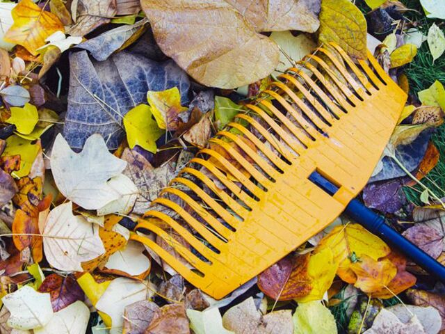 Fall lawn care maintenance tips - Autumn lawn care advice ...