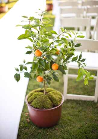 Potted orange tree aisle marker