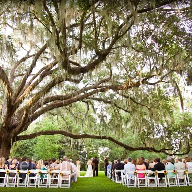 Wedding Altar Trees: A Casual Wedding In Santa Rosa Beach, FL