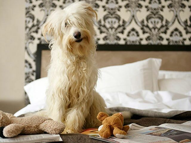 Are You Living In One Of The Most Pampered Pet Cities In The Us
