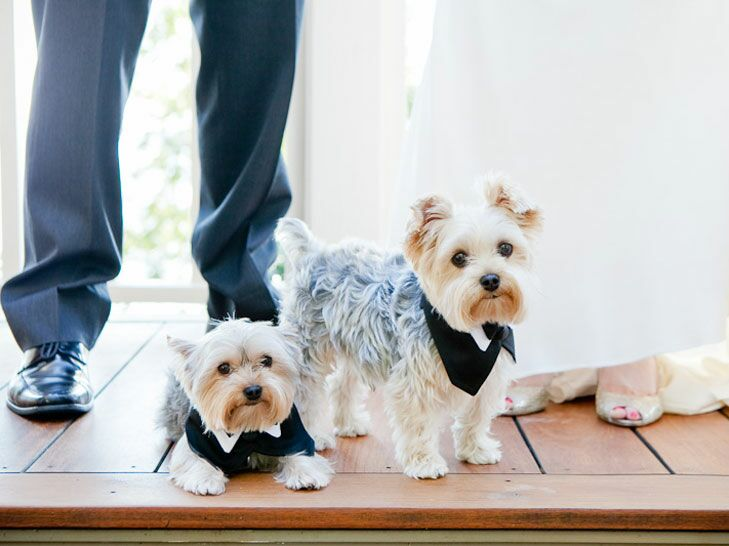 Puppies in wedding tuxedos