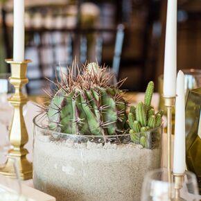 Cactus Centerpieces For Modern Desert Wedding