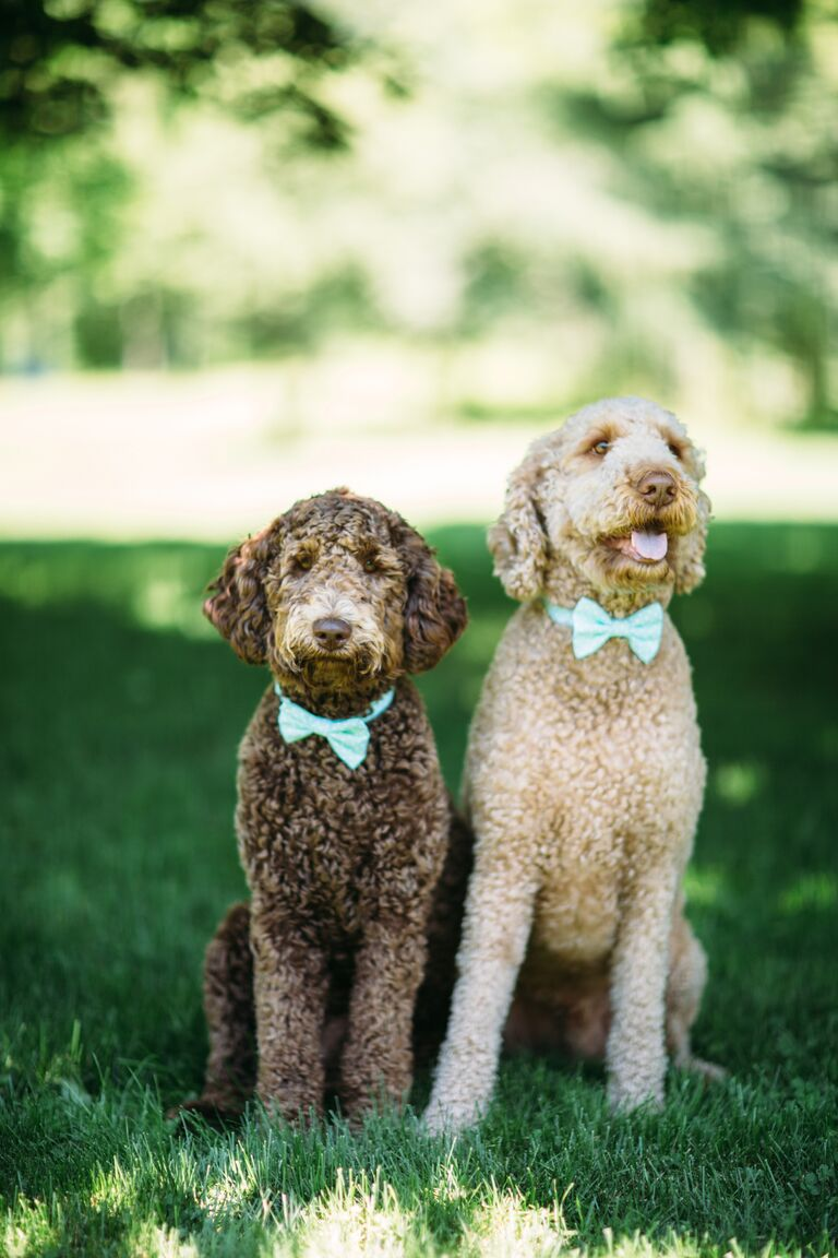 Dogs in Blue Bowties