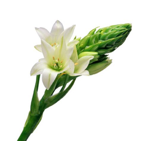 Wedding flower guide with season color and price details white ornithogalum flower mightylinksfo Images