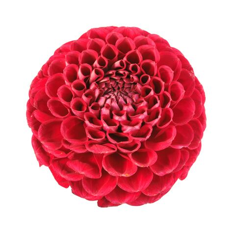 Wedding flower guide with season color and price details red dahlia flower mightylinksfo