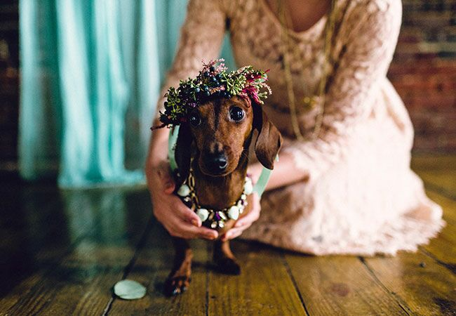 This Puppy Wedding Is Crazy Cute