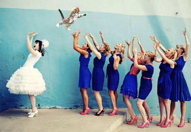 Brides Throwing Cats Meme