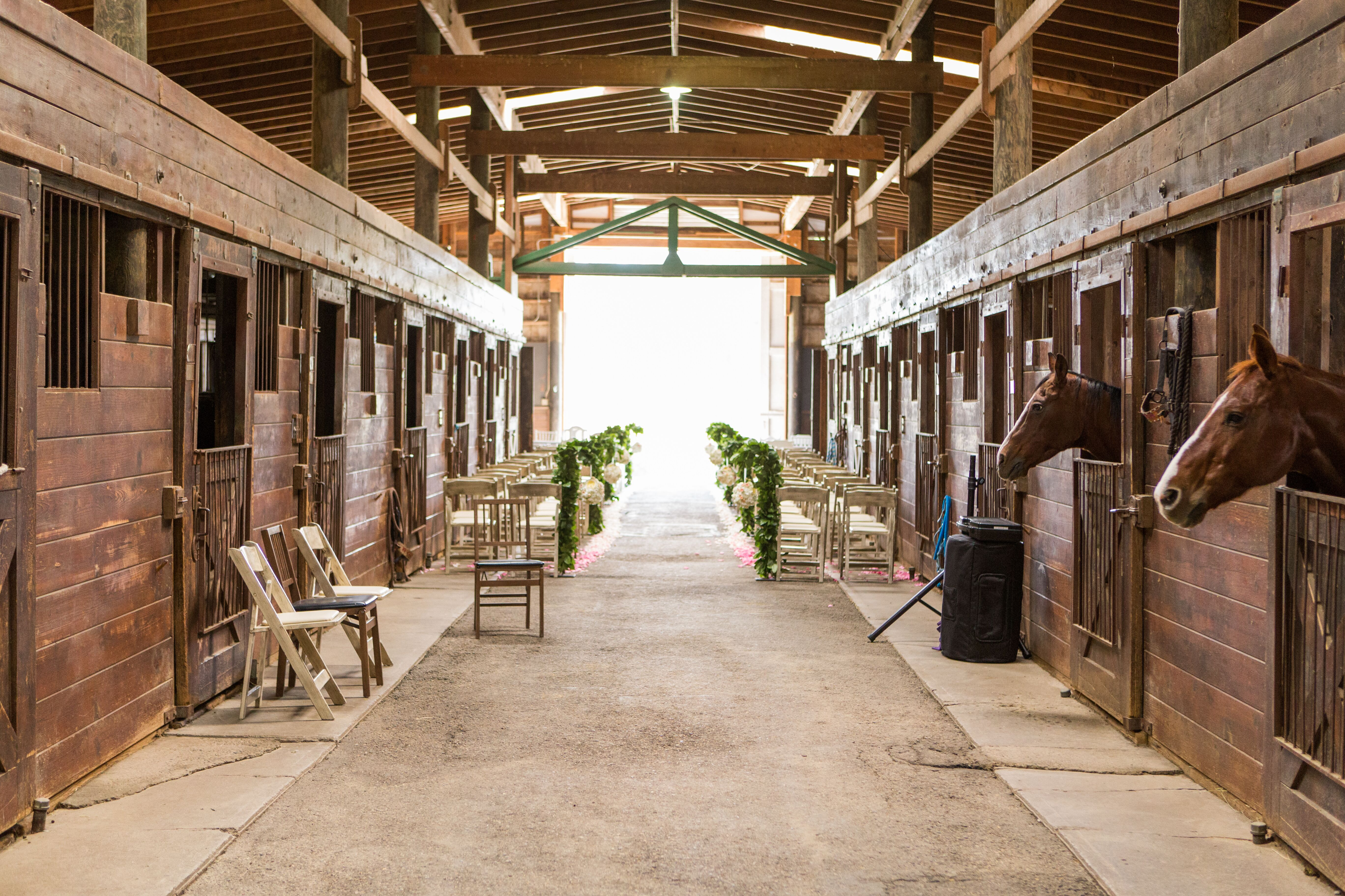 Horse And Stable Wedding