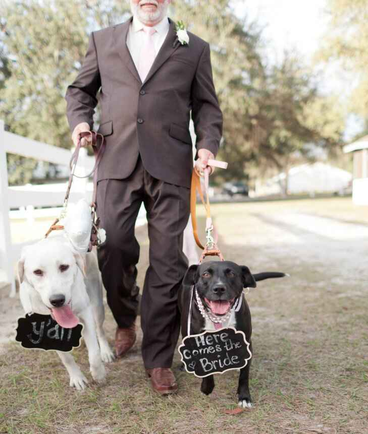 Dogs wear chalkboard signs for walk down the aisle