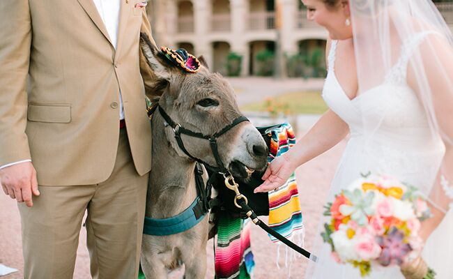 7 Reasons Why Having A Donkey At Your Wedding Is A Great Idea