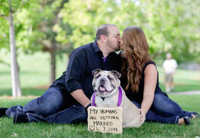 Engaged couple with bulldog
