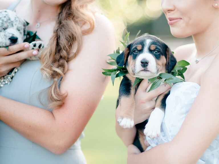 Cute puppy bouquets