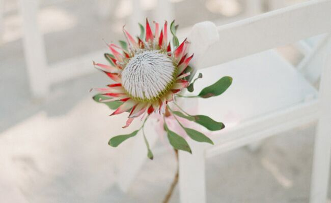 Like Succulents? Then You'll Love The Latest Wedding Flower Craze