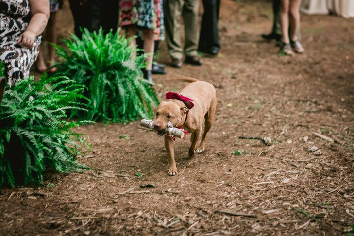 The couple's dog, decked out in a festive burgundy bow, walked down the aisle for the ceremony processional.