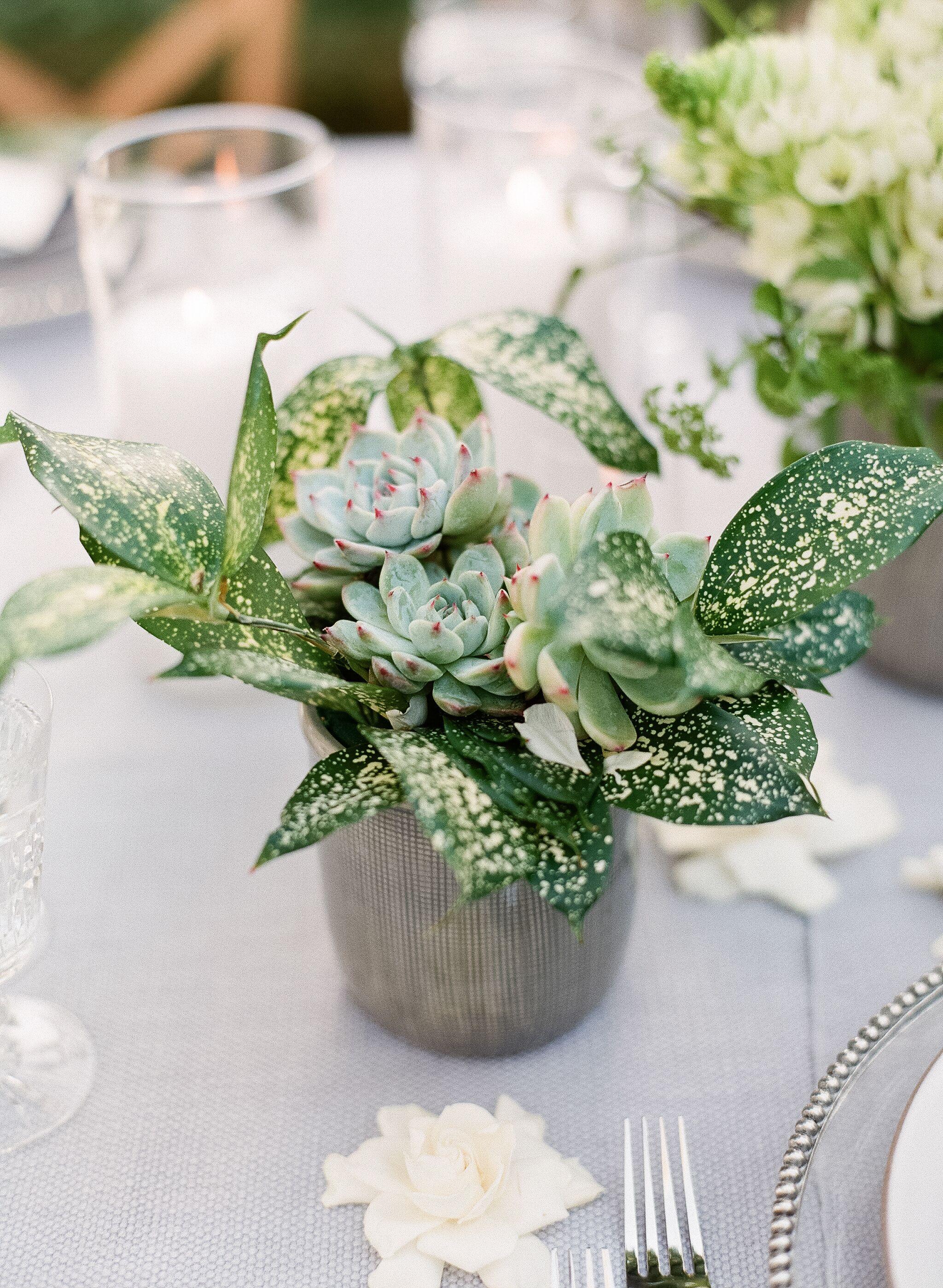 Eco Friendly Succulent Centerpieces