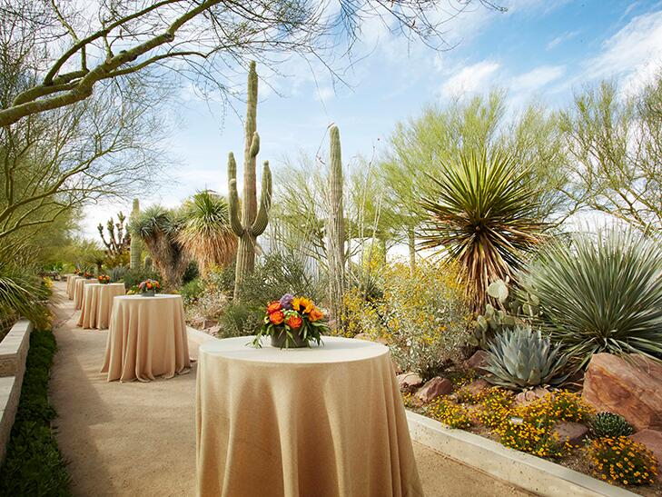 tables set up for a wedding in a cactus garden