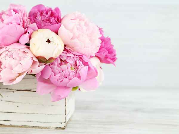 Read on for pro tips to keep your flowers fresh.