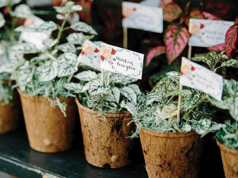 Flower pots for floral wedding favors